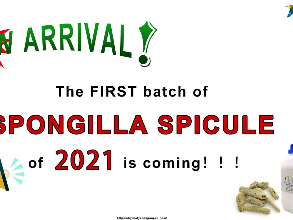 The FIRST batch of SPONGILLA SPICULE of 2021 is coming!